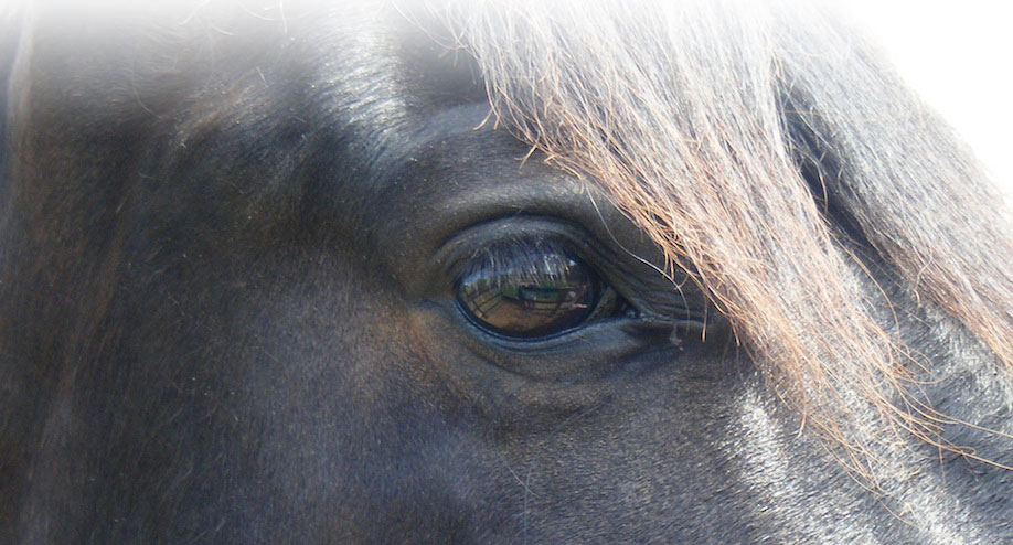 """A dog looks up to a man, a cat looks down on a man, but a horse looks a man in the eye and sees him as an equal""Anonymous"